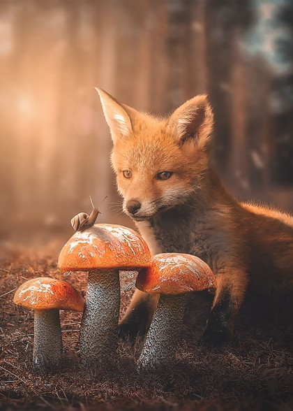 Fox and Snail