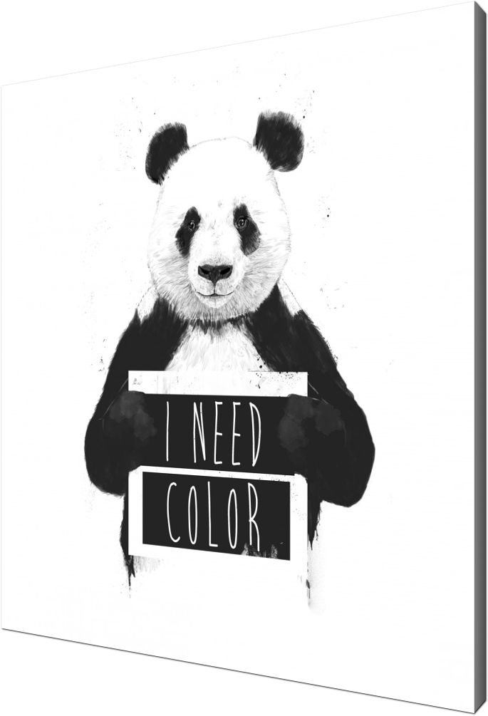 I need color, panda, bear, animals, wildlife, nature, typography, humor, funny, text, drawing, graffiti