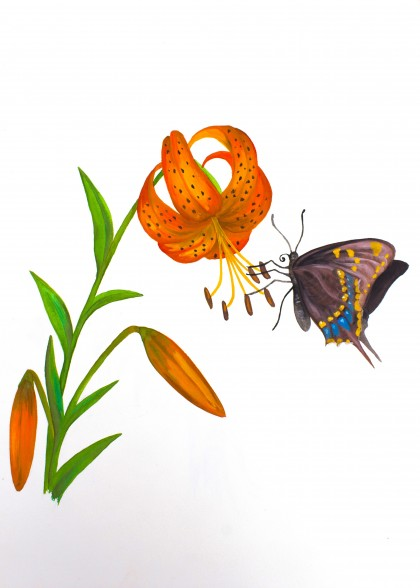 The lily and butterfly